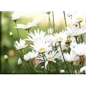 Flores Manzanilla Flor Salvaje Foco Blanco 2048