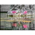 Reflexión Naturales flores Al Aire Libre