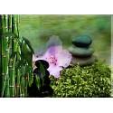 cuadro Zen Jardín Japonés Jardín Meditación Calma