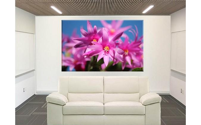 2050-Cactus De Navidad Flores Rosa