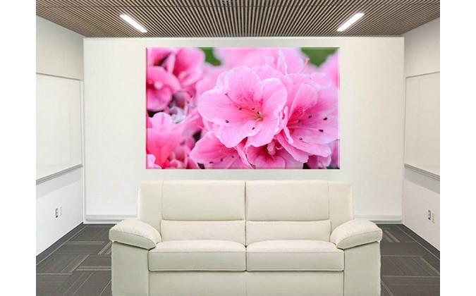 Flores De Color Rosa Flor Naturaleza Planta Jardín