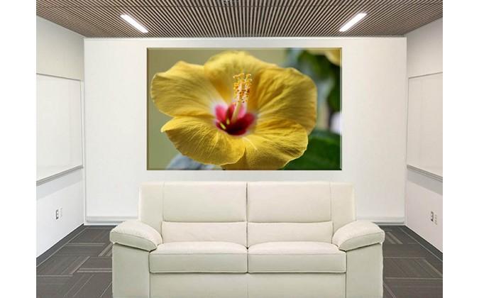 Flor Amarillo Malva Malváceas