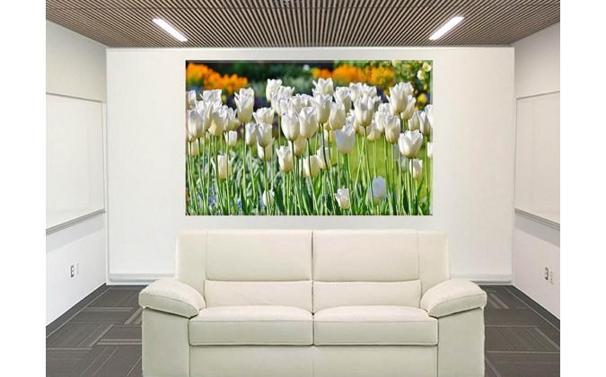 prado de tulipanes