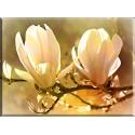 magnolia fondo abstracto-