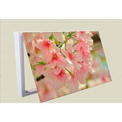 Tapa contador-Flores De Cerezo Primavera Planta