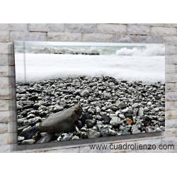 Playa de piedras-20022