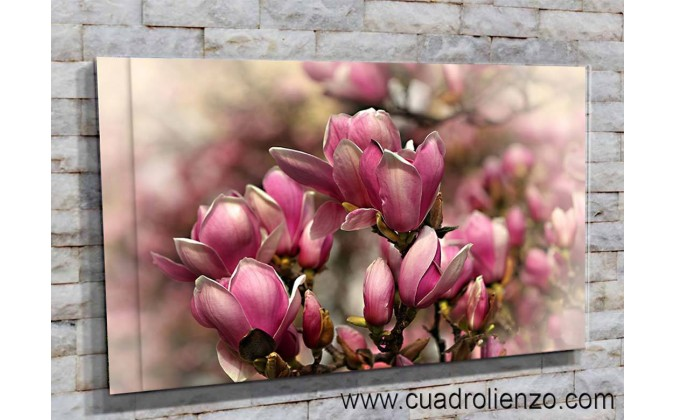 5502-Manojo de magnolias