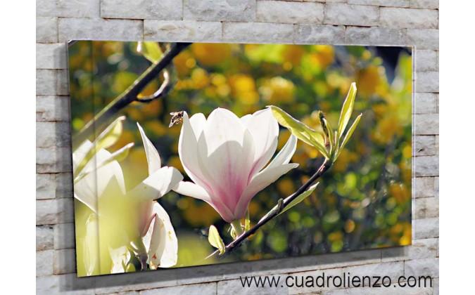 5508-Magnolia en el bosque