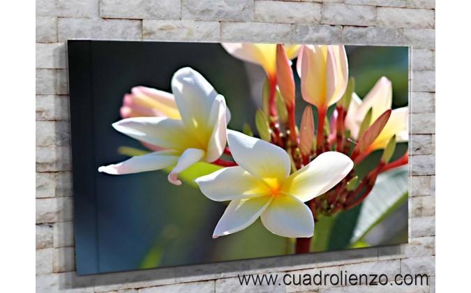5511-Magnolias decorativas