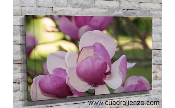 5513-Magnolia fusia