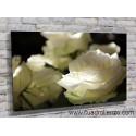 9004-Rosas blancas