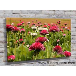 9020-Flor rosa de jardin