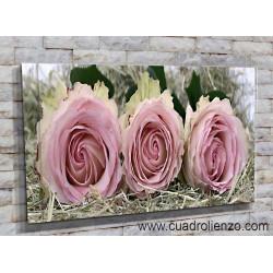 9021-Rosa romance