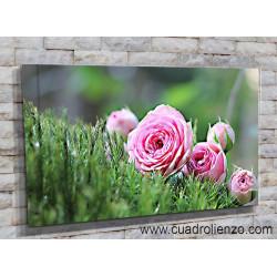 9024-Rosa Rosa entre musgo