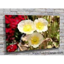Amapolas amarillas-1011