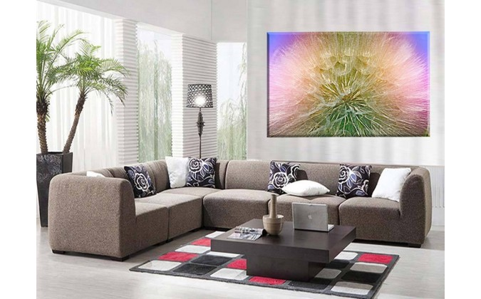 dandelion violeta