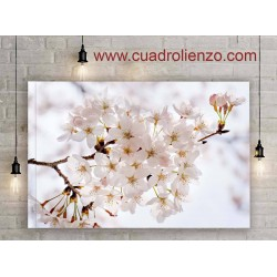 Floreciente Flor Rama Cereza Flora Flores