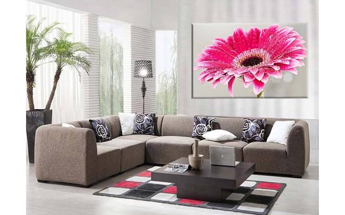 Margarita Primavera Flor roja Naturaleza