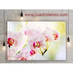 Orquídea De Plantas Ornamentales