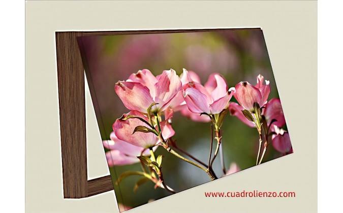 Cubre contadorr Cornus Ramita De Floración Flor Árbol