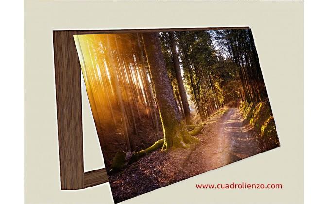 Cubre contadorr Bosque Cálido La Naturaleza La Luz