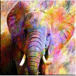 elefante en color