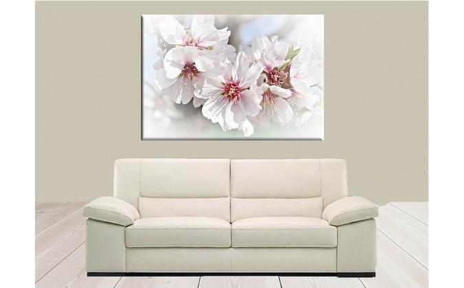 Flor De Almendro Floración Romántico