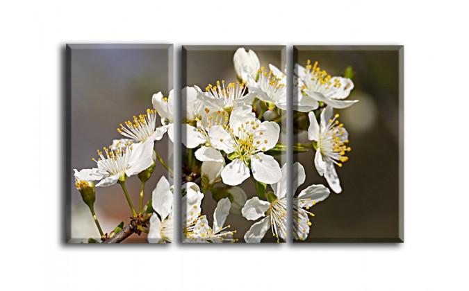 Flor de abeja-2016