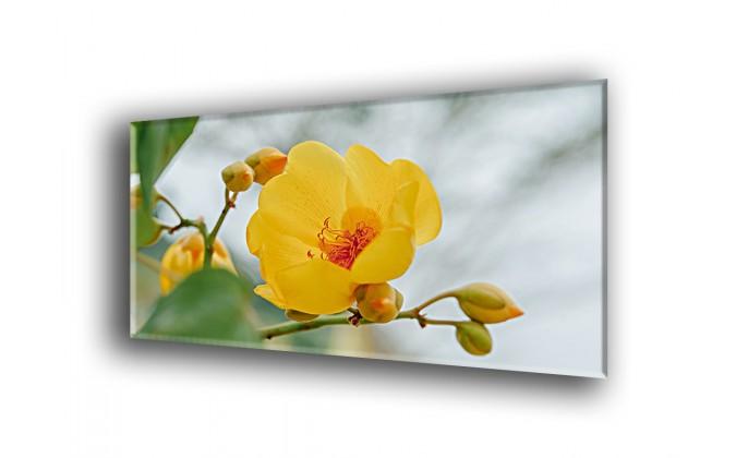 Supannica flower-2034