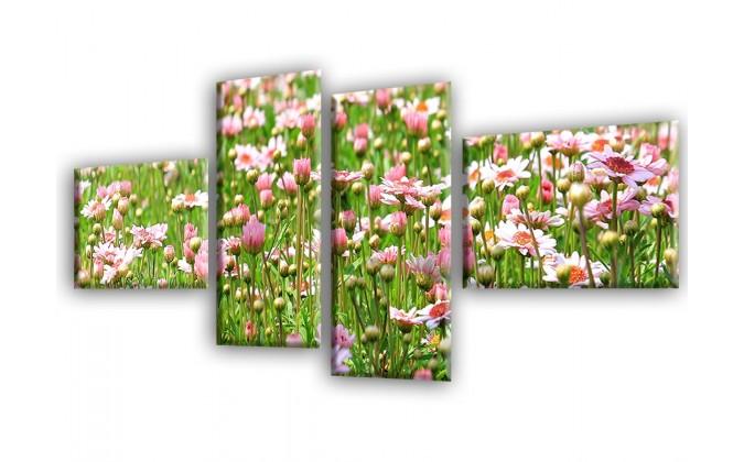 Prado de flores-2037