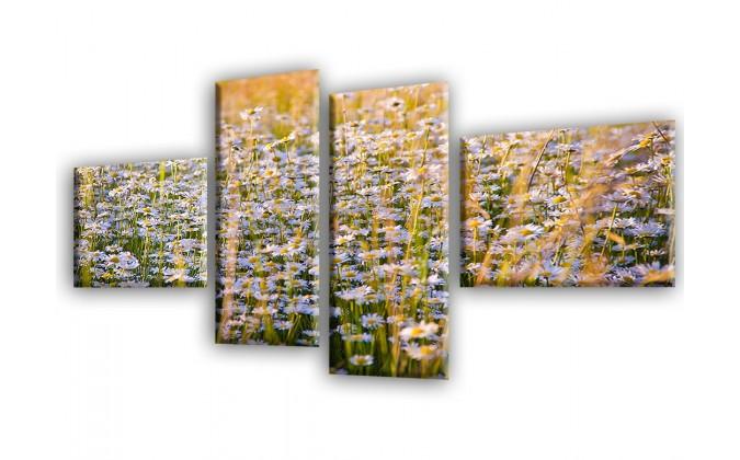 Naturaleza manzanilla-2038