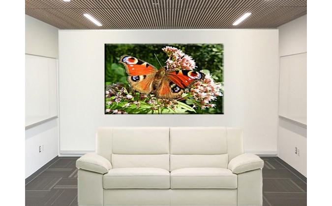 Mariposa colorido-50003