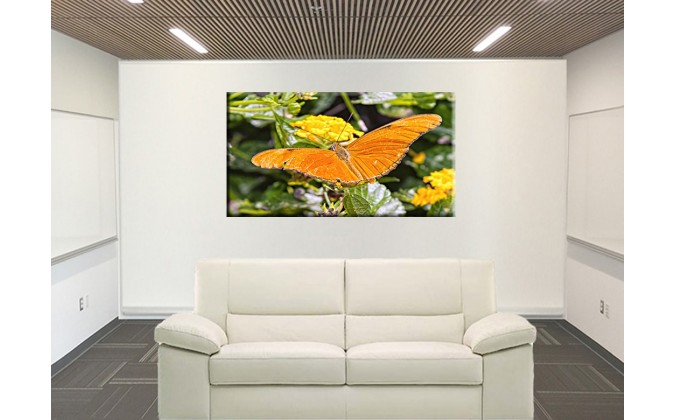 Mariposa naranja-50004