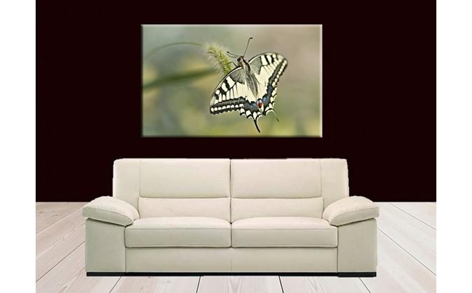 Mariposa solitaria-50005
