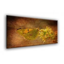 Mariposa texture-50007