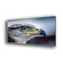 Aguila observadora-50101