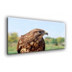 Aguila de presa-50102