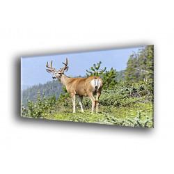 50301-ciervo solitario