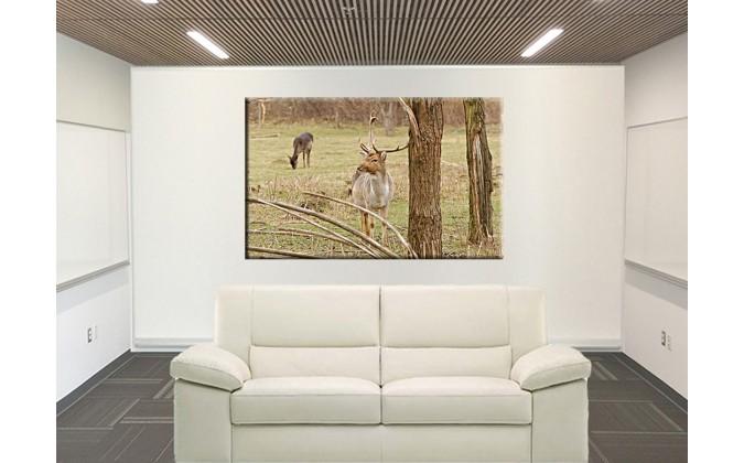 50302-ciervos en el campo