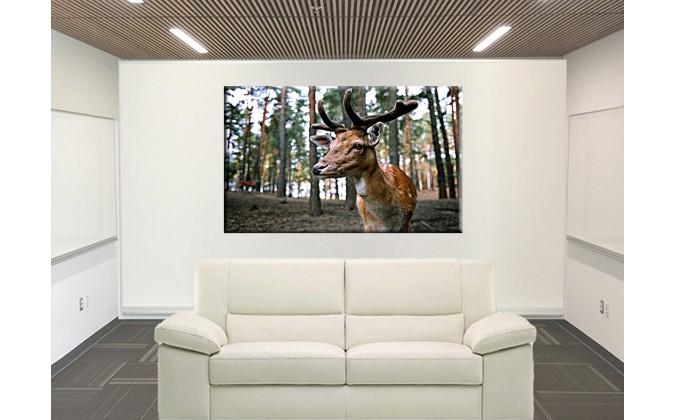 50303-ciervos