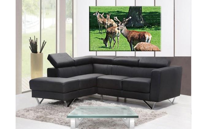 50305-ciervos