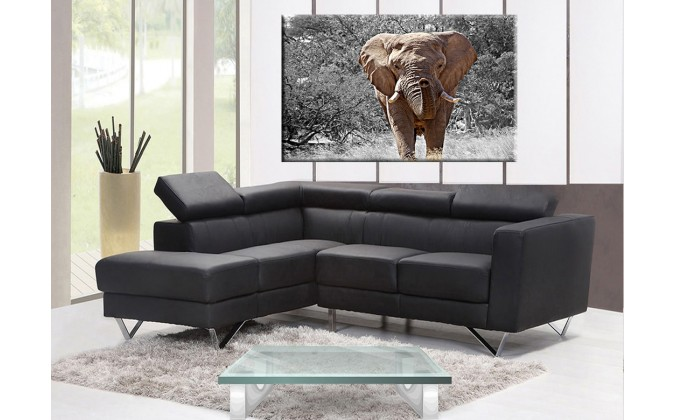 50400-Elefante grande
