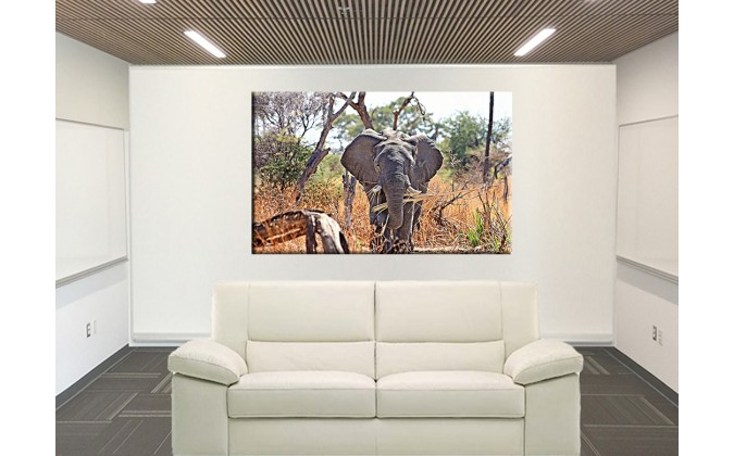 50402-Elefante en la Sabana