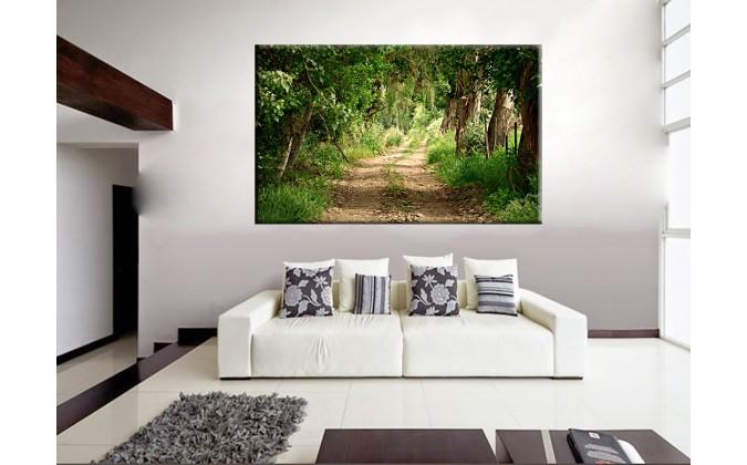 22007-Camino selva