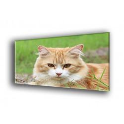 50500-Gato observador