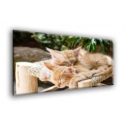 50505-Gatos dormidos
