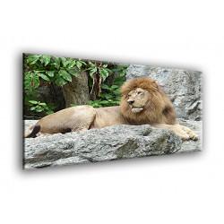 50701-Leon cansado