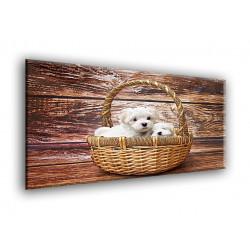 50801-Cachorritos en la cesta
