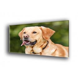 50802-Dog