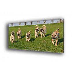50803-Cachorros jugando